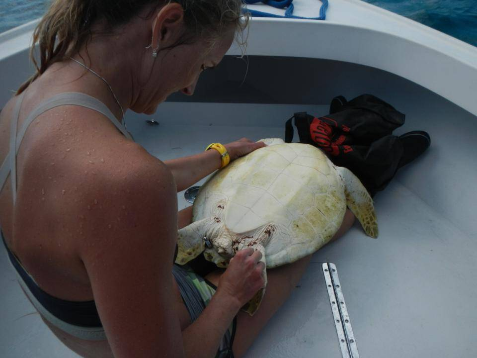 Beth and turtle