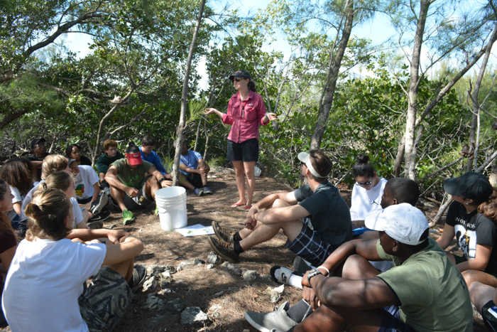 Mangrove disease discussion