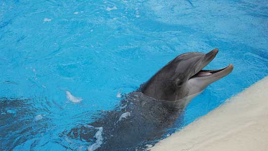 marine mammals essay Captivity of marine mammals the concern that is being presented is that of whether we should allow marine parks to stay open has been extensively debated in our.