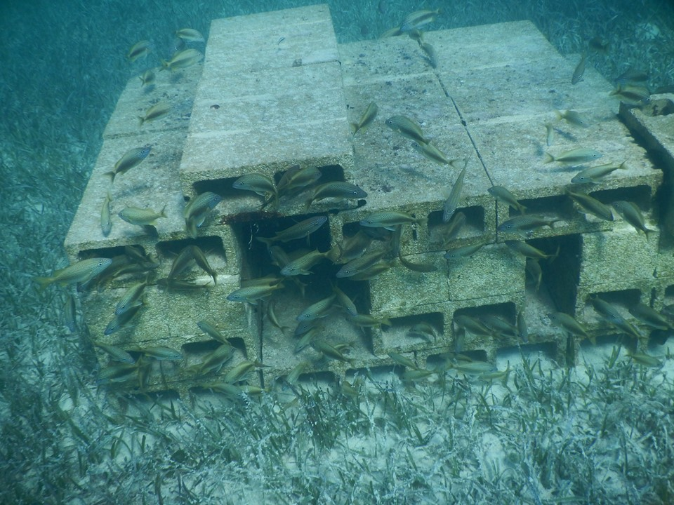 Abaco Scientist Artificial Reefs