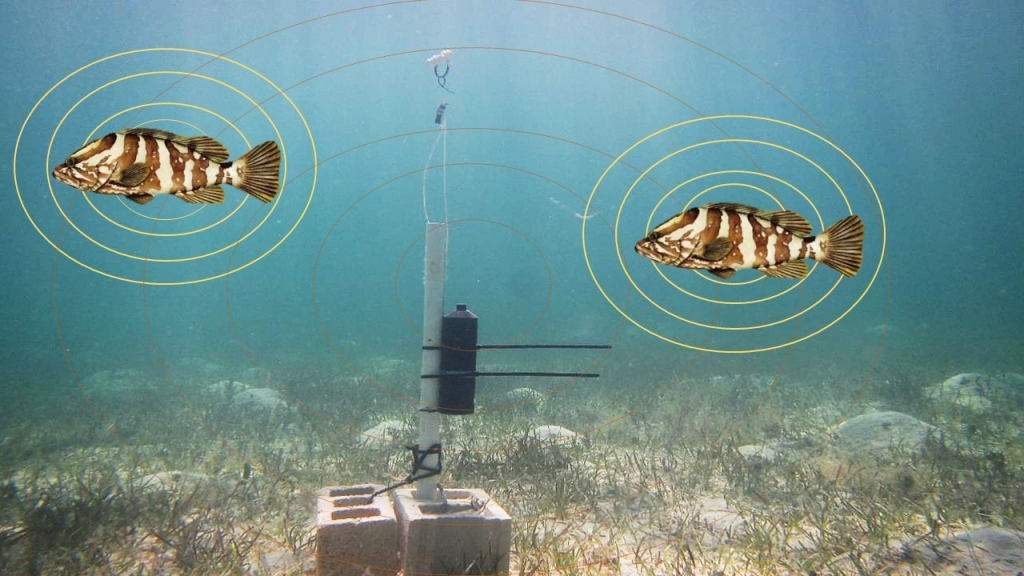 Image displaying how acoustic telemetry works.