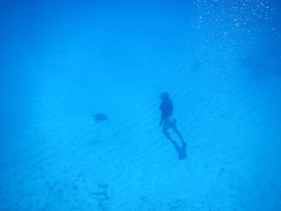 Turtle diving 3