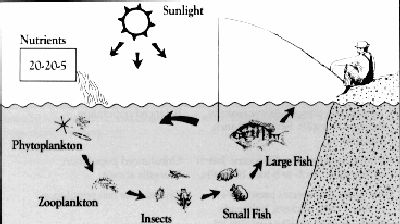 FIG8_aquatic_food_chain
