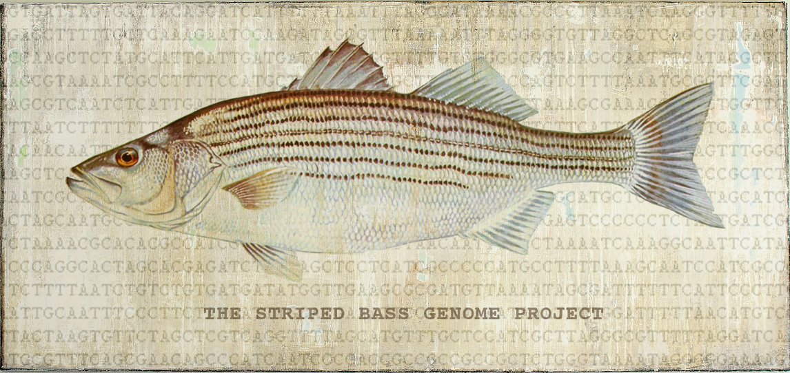 striped_bass_project