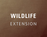 wildlife_extension